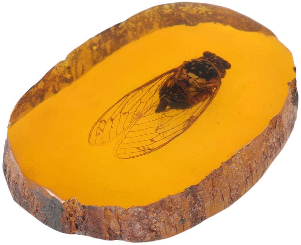IMIKEYA 앰버 화석 곤충 샘플 돌 크리스탈 표본 홈 장식 컬렉션 펜던트 매미