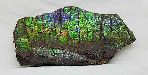 캐나다 자연 3.X1.7MM 고급 거친 AMMOLITE 화석 254