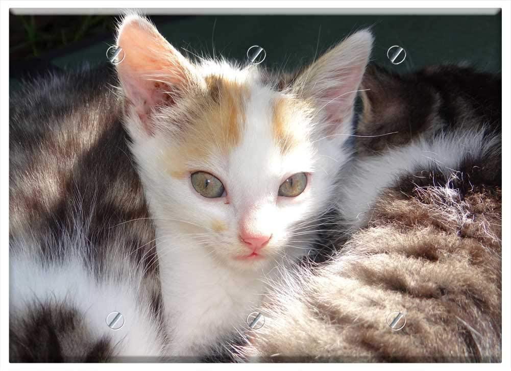 트리플 빈 벽 판 커버 - 동물 고양이 아기 귀여운 모피 고양이 아기