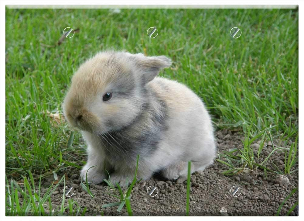 트리플 빈 벽 판 커버 - 토끼 아기 토끼 동물 포유류 설치류 애완 동물