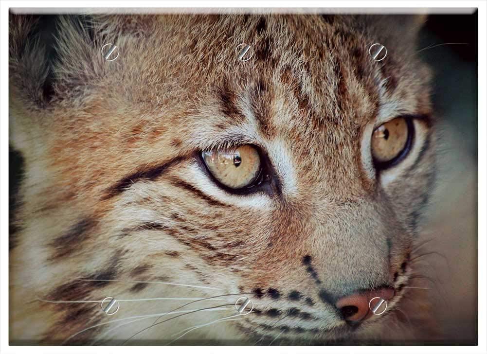 트리플 빈 벽 판 커버 - 살쾡이 살쾡이 아기 젊은 동물 고양이